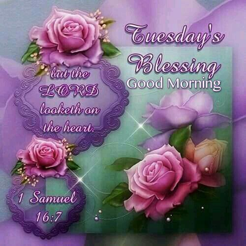 Tuesday's Blessing, Good Morning good morning tuesday tuesday quotes good morning quotes happy tuesday good morning tuesday quotes happy tuesday morning tuesday morning facebook quotes tuesday image quotes happy tuesday good morning