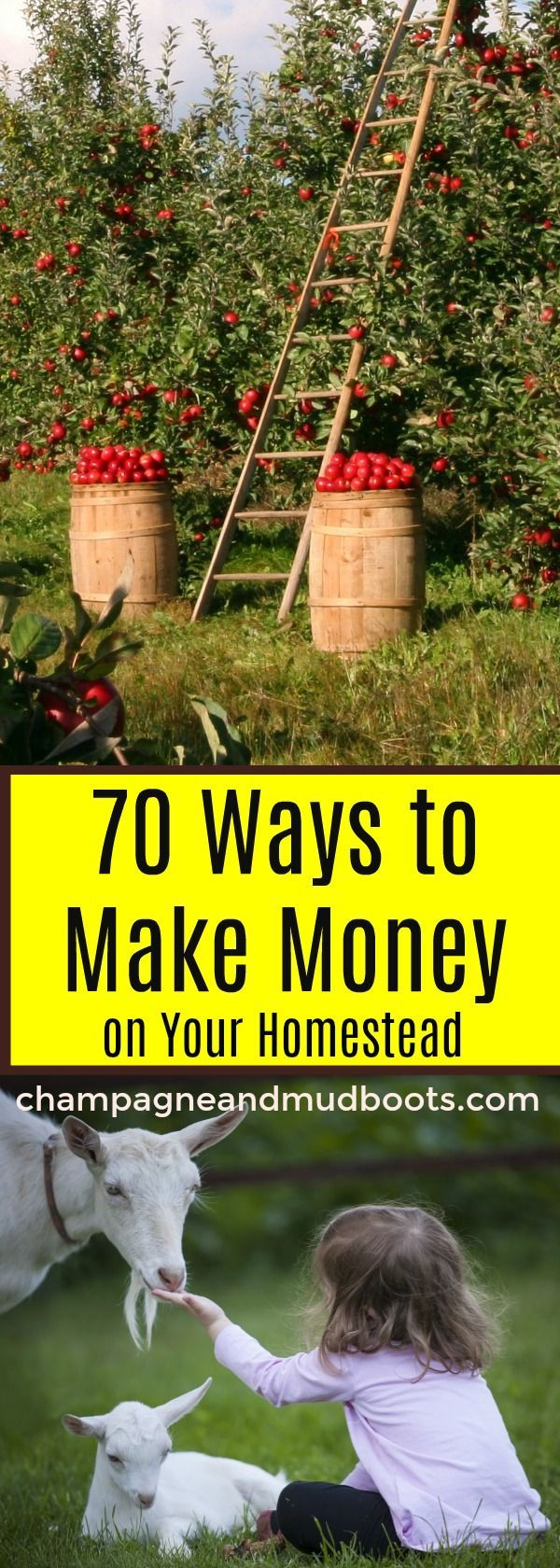 Ways to Make Money on a Homestead – Homesteading for beginners