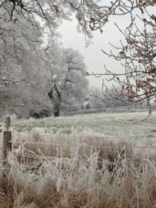 Jack Frost in Henley-on-Thames
