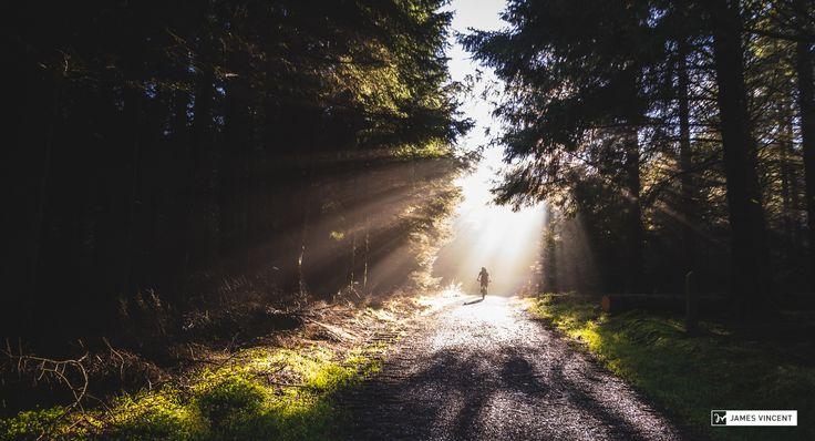 Morning Mist at Whinlatter Forest