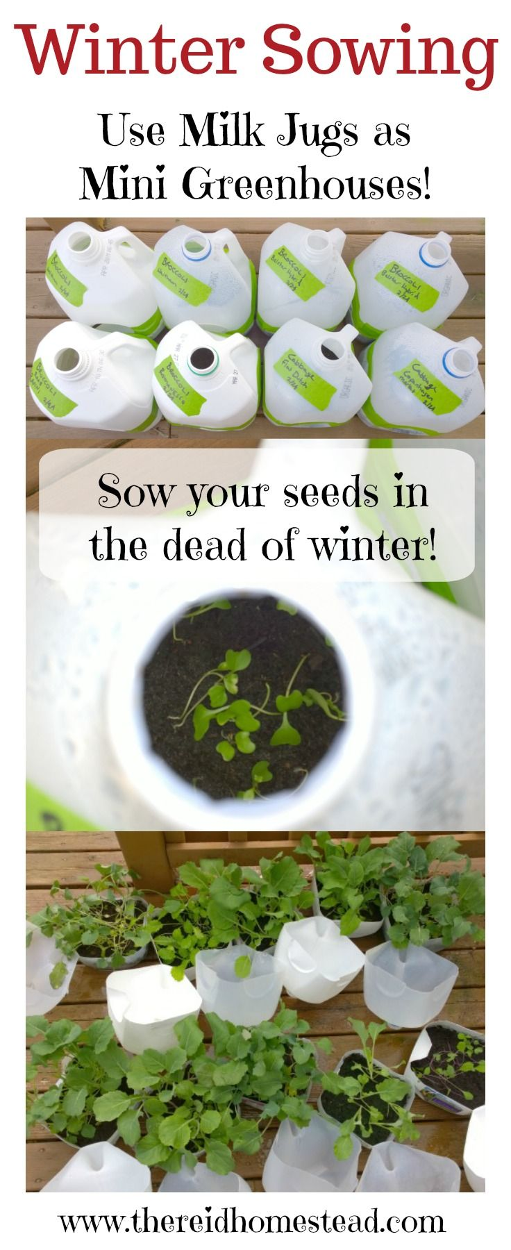 Winter Sowing-learn how to plant seeds in the dead of winter! An easy way to grow your garden. Plant the seed and then forget about it until spring! Part of my Seed Starting 101 Series on The Reid Homestead