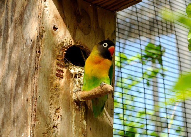Harga Lovebird – Banyak sekali jenis burung yang laris manis dipasaran, ini dikarenakan karena semakin hari banyak sekali para kicau mania untuk mengoleksinya untuk dijadikan sebagai masteran. Pada kesempatan kali ini saya akan membahas harga burung lovebird terbaru atau yang umum dikenal dengan singkatan LB. Merupakan sebuah burung kicau yang memiliki warna beragam, misalnya saja …