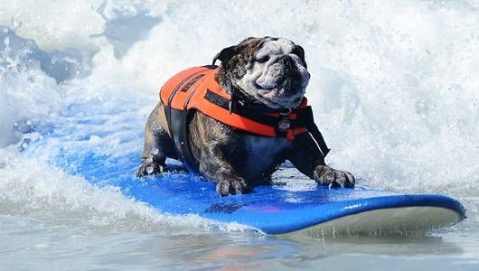 Canines hit the waves for Surf Dog competition [Photos]