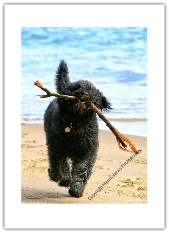 Labradoodle Dog Greeting Card Birthday Black by BeadysWorld