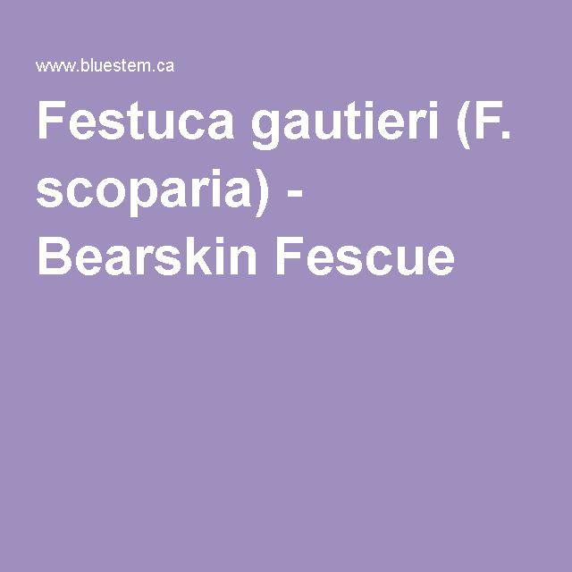 Festuca gautieri (F. scoparia) - Bearskin Fescue