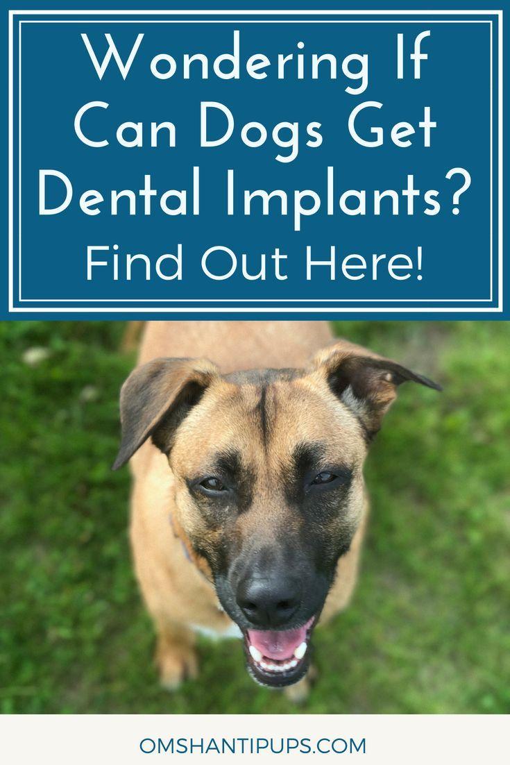 Can dogs get dental implants dog dental health dog