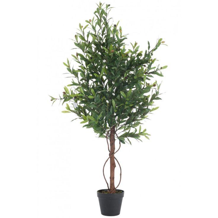 best 20 olivier en pot ideas on buxus espalier and plantes porche