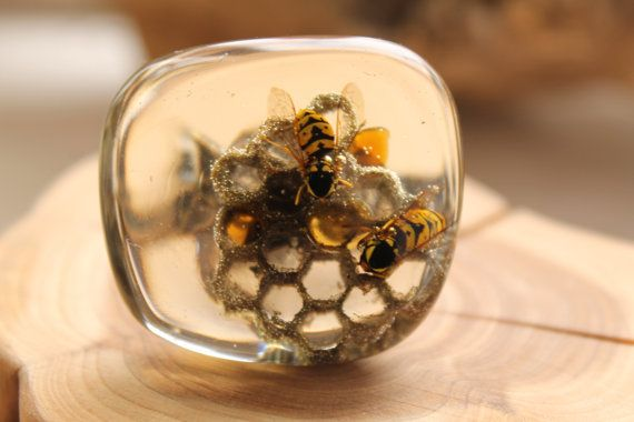 Taxidermy jewelry Wiccan jewelry Wasp and by DreamsSophie on Etsy