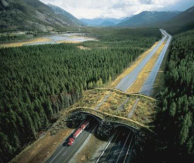 Animal Bridge: BANFF NATIONAL PARK, CANADA - The wildlife overpass provides safe passage for all manner of creatures to cross the Trans-Canada Highway from one part of the vast Banff National Park to the other. The structure appears to be both man-made yet primitive.