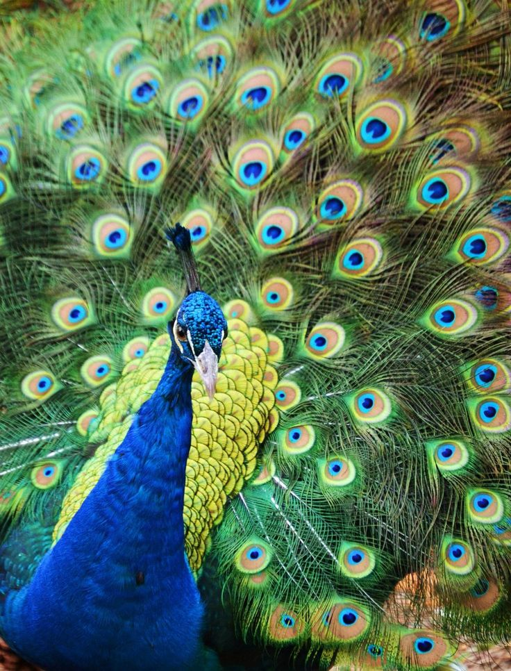 113 best paint color schemes peacock blue and green from for Best peacock blue paint color