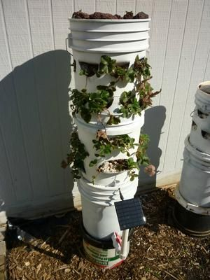 solar powered 5 gallon bucket planter - 5 Gallon Bucket Garden