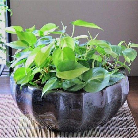 43 Best House Plants Images On Pinterest