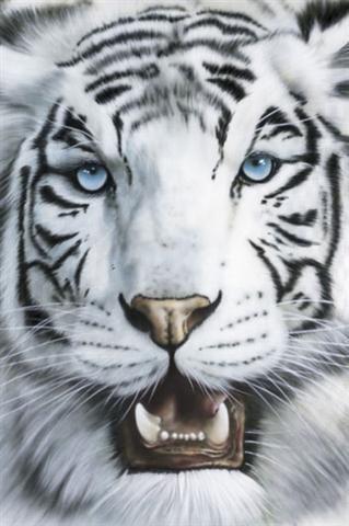 tigre cachorro blanco - Buscar con Google