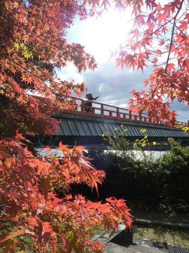 宇治朝霧橋と紅葉