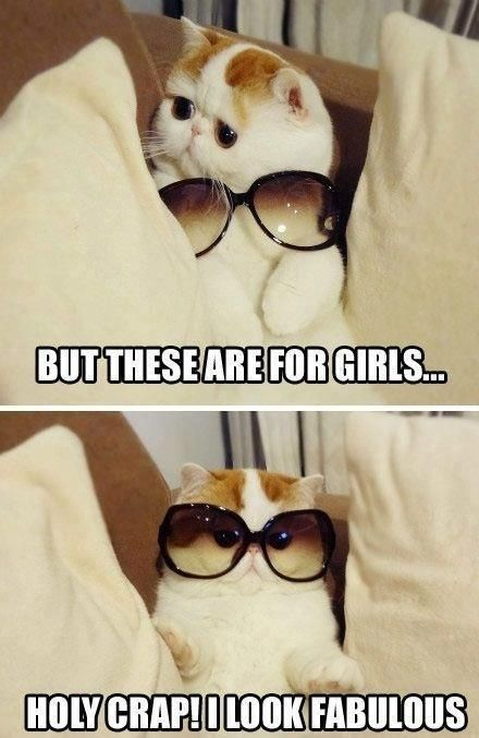 funny cat with glasses picture