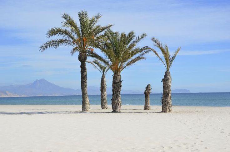 playa San Juan, Alicante. Alicante con niños! https://www.viajarsolo.com/monoparental-puente-diciembre-con-ninos-en-alicante-viajar-solo