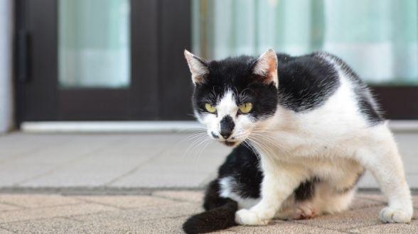 """【荻窪圭の""""這いつくばって猫に近づけ"""" ― 第175回 ニコン「D7000」で撮る秋の猫】"""