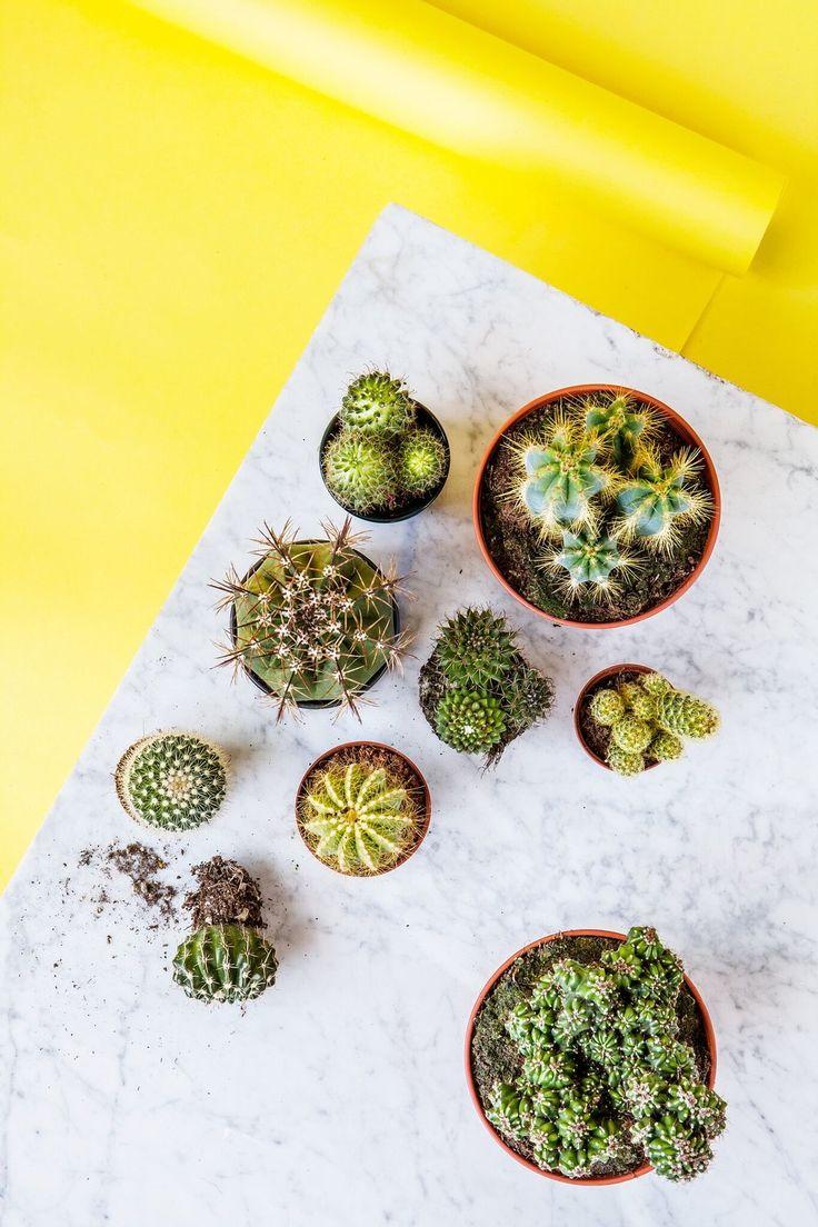 Sanna Luhaniemi / Yellow + cactus