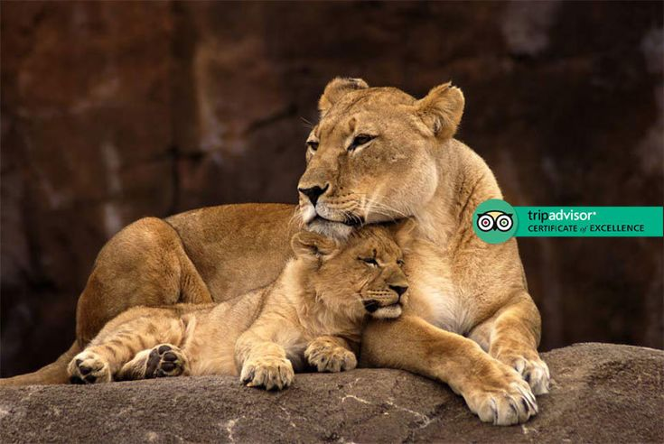 Discount UK Holidays 2017 5 or 7nt 5* All-Inc South Africa Safari at Vuyani Lodge From £479pp (at The Vuyani Safari Lodge) for a five-night, all-inclusive South African safari with daily game drives, from £559pp to include transfers, from £659pp for seven nights - save up to 36%