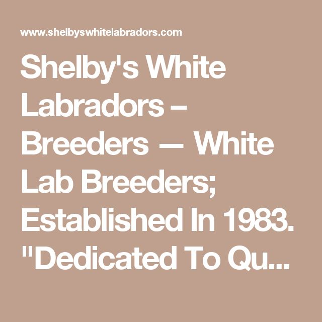 "Shelby's White Labradors – Breeders — White Lab Breeders; Established In 1983. ""Dedicated To Quality; Bred With Care"""