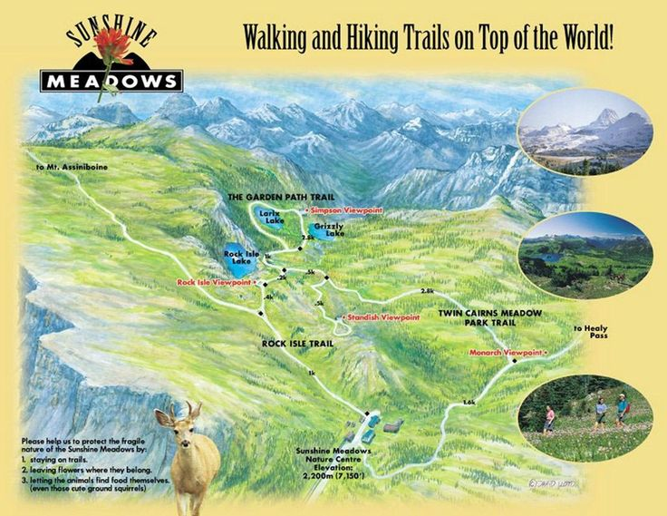 Sunshine Meadows: Amazing gondola ride and even better hike! - See 293 traveler reviews, 178 candid photos, and great deals for Banff, Canada, at TripAdvisor.