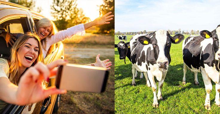 Sommar, sol och semester. Nu märks det att stadsborna längtar till landet. Här är 8 tecken på att stadsborna är på grönbete.