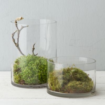 132 Best Aquascapes And Terrariums Images On Pinterest | Plants, Gardening  And Bonsai Trees Part 67