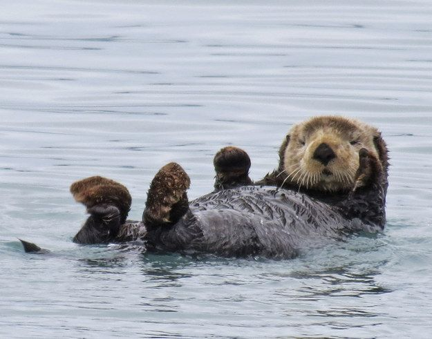 "Sea Otter Week | 15 Other ""Weeks"" Discovery Channel Should Seriously Consider Creating"