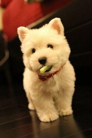 おやつの上手な活用法 「Dog Safety 倶楽部 」のファンがつくるサイト