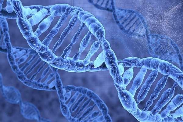 Τα τελευταία χρόνια, δύο νέες επιστήμες η Διατροφογενωμική και η Διατροφογενετική ξεπροβάλλουν και εξετάζουν την αλληλεπίδραση γονιδίων και διατροφής, προκειμένου να κατανοήσουμε σε βάθος τη σημασία και την επιρροή της διατροφής στην υγεία μας ...