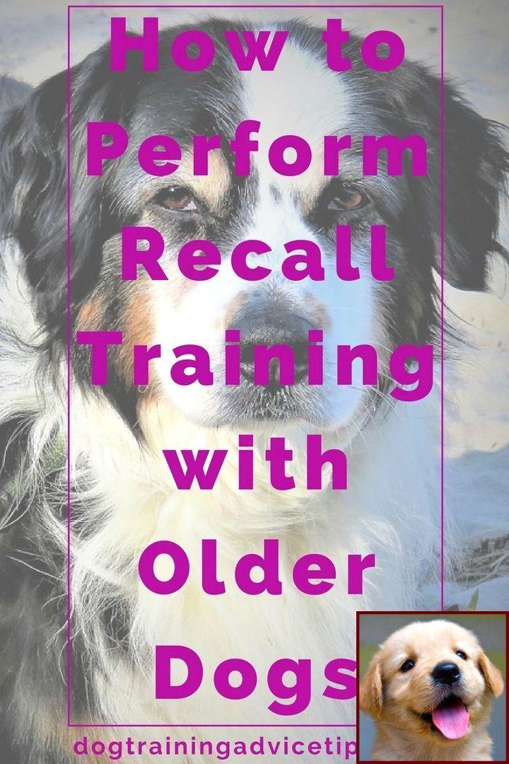 Potty Training A Mastiff Puppy And Dog Training Classes Orlando