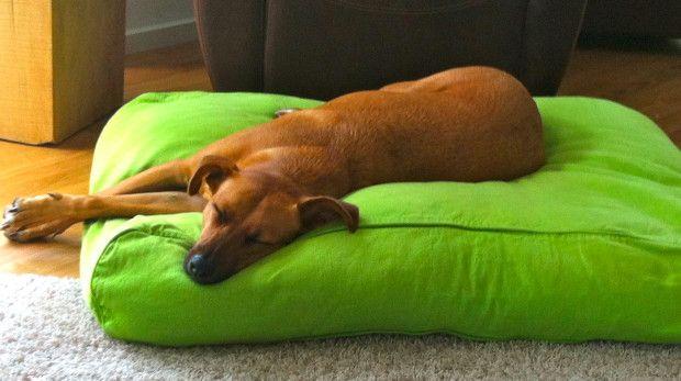 PROFESSIONAL DELUXE Hundekissen - Höhe 21cm - Hundebetten Qualitätsvoll schön und gemütlich