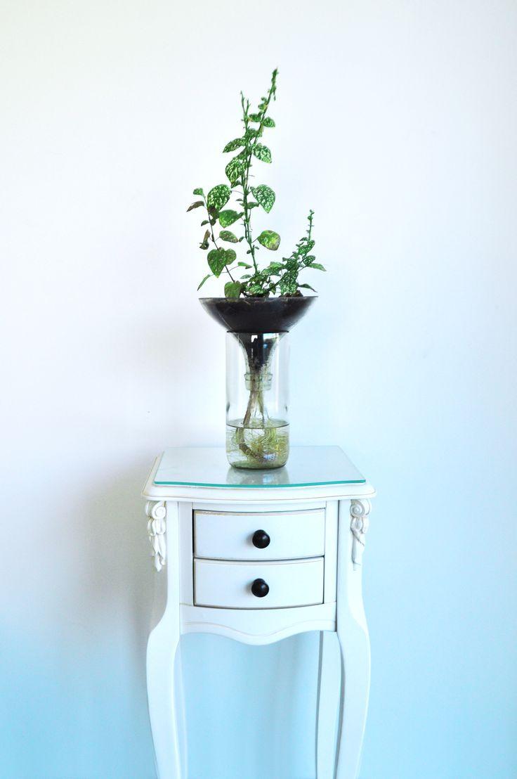 Plantas, Plantas en botellas, Diseño ecológico, Diseño sustentable, Diseño con botellas, eco diseño, plantas ornamentales, diseño de interior, plantas ornamentales
