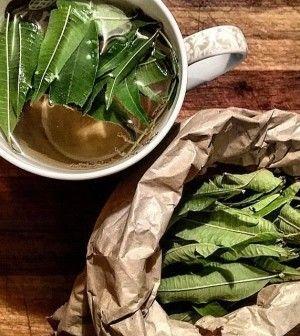 Verbena: la pianta che protegge la milza e potenzia il sistema immunitario