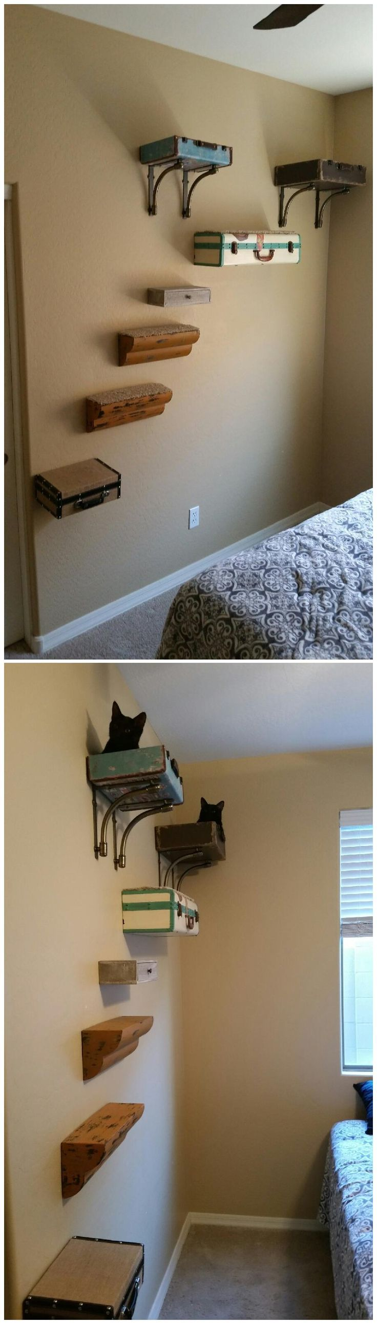 207 best wall shelves for cats to climb images on pinterest for catification wall suitcase beds shelves stairs cat tree tap the link now to see all amipublicfo Image collections