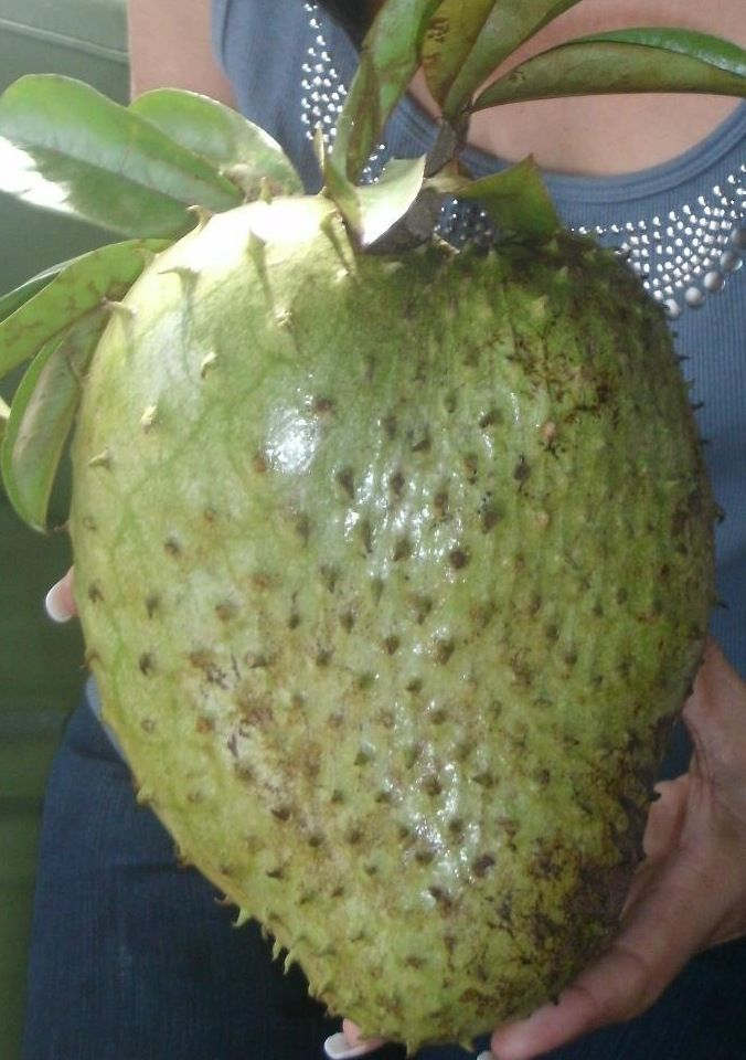 Soursop but also known as Guanabana in the Spanish Caribbean
