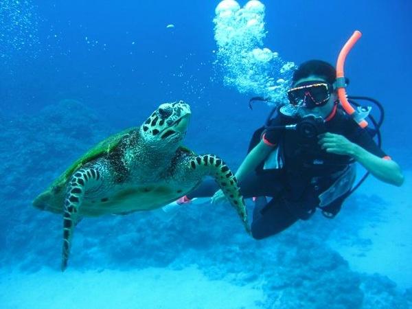 沖縄・渡嘉敷島でウミガメ - begin ダイビングバディズさん|あそびゅー!スキューバダイビング