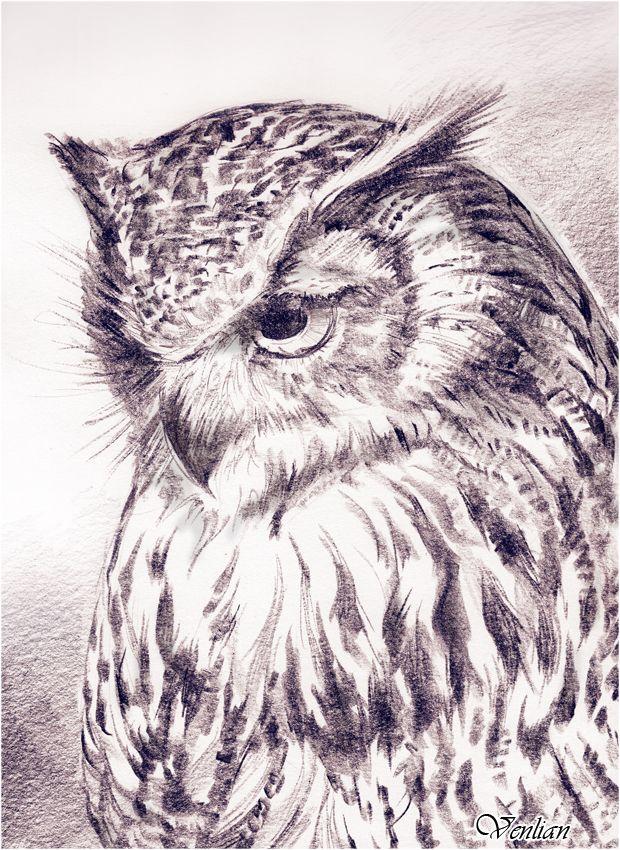 Owl by Venlian.deviantart.com on @DeviantArt