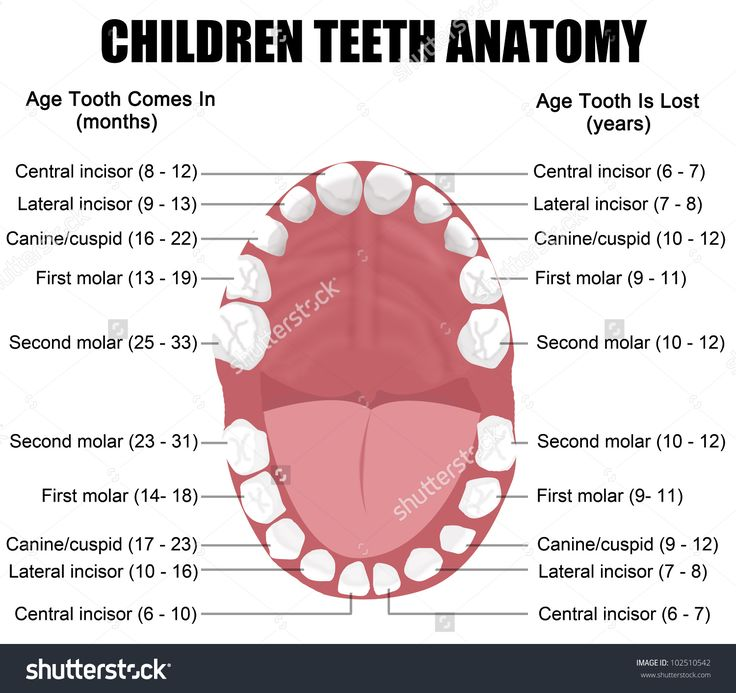 29 best dental anatomy images on Pinterest | Dental anatomy, Dental ...