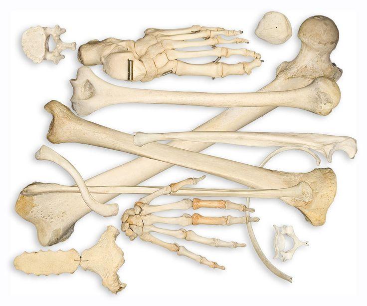 Zdravotní experti říkají, že bolest v ramenou, kloubech a nohách může být způsobena špatným držením těla. Je nutné, zlepšit držení těla.