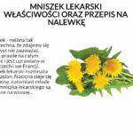 Mniszek - roślina tak powszechna, że zdajemy się go nawet nie zauważać. rośnie prawie na całym świecie i jest uprawiany w Niemczech i we Francji. Mniszek lekarski rozmnaża się z nasion. Nasiona sieje się na wiosnę, natomiast młode liście mniszka lekarskiego są zbierane na wiosnę. W Polsce jest to bardzo pospolita roślina, występuje na całym niżu i w niższych położeniach górskich.  Mniszek lekarski jest skarbnicą wielu cennych substancji, do których zaliczamy: - witaminy C, D, A oraz…