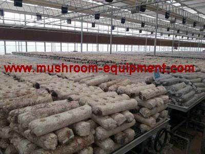 shiitake mushroom log,Lentinula edodes log,mushroom cultivation log