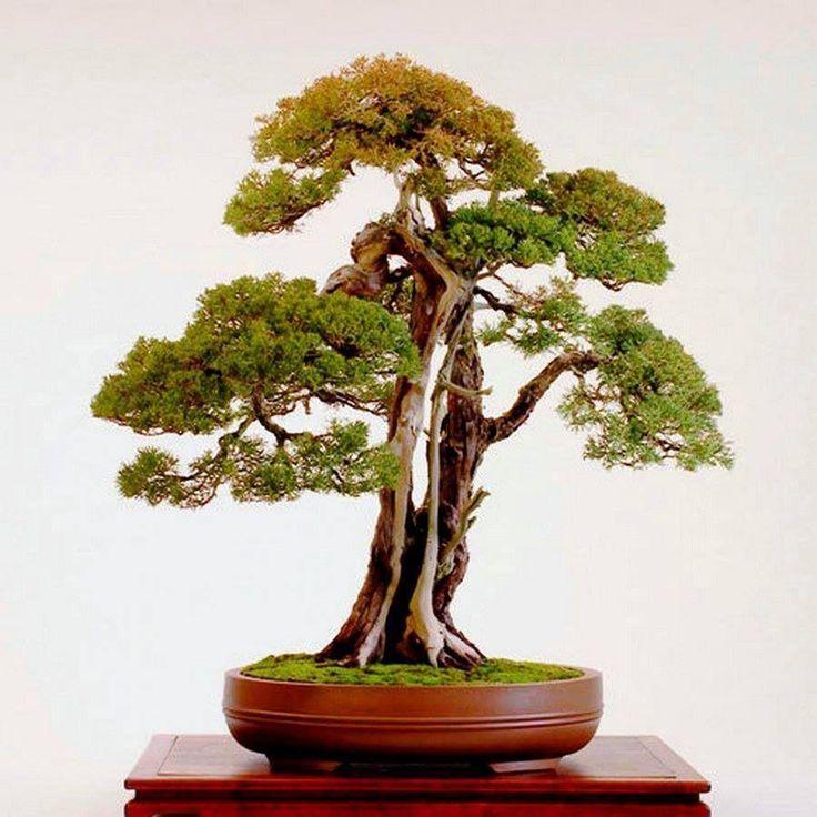 Bonsai                                                                                                                                                                                 More