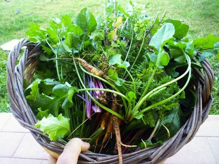 happy forager http://www.essentaste.com/copertina/il-raccoglitore-felice/