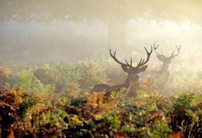 Kudy z nudy - Návštěvnické centrum Kvilda - za poznáním života jelenů