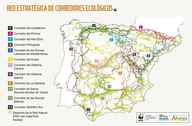 Corredores ecológicos. Informe Autopistas Salvajes | WWF España