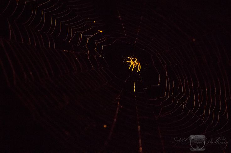 The Spider by Mike Anthony on 500px