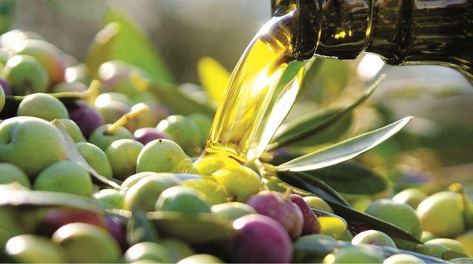 Olive, prezzi alle stelle ladri assaltano uliveti - http://blog.rodigarganico.info/2014/attualita/olive-prezzi-alle-stelle-ladri-assaltano-uliveti/