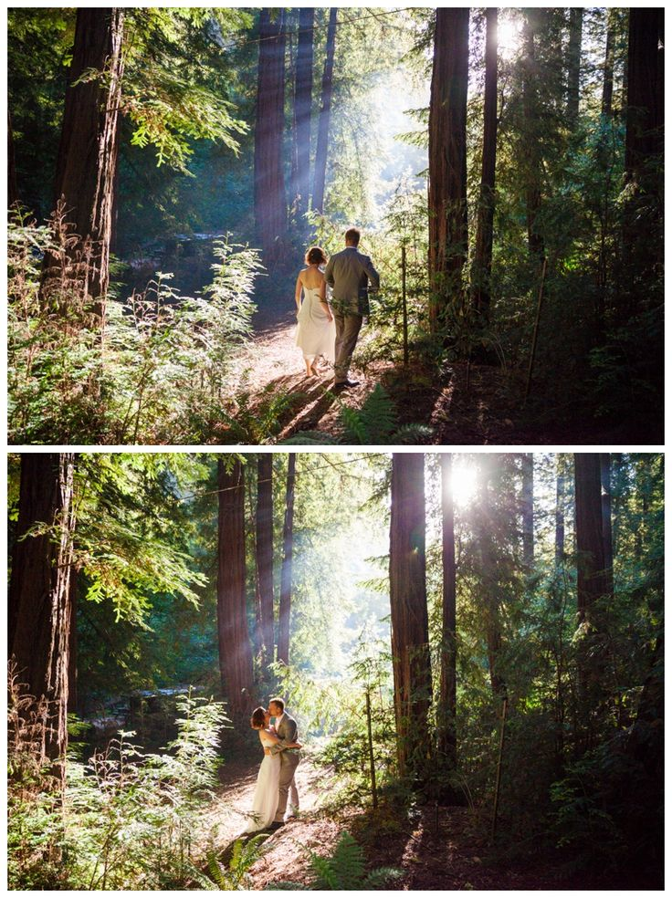 Beautiful redwoods light bride and groom - Glen Oaks, Big Sur - Boutique Destination Love & Wedding Photography by Paul & Jewel Studios