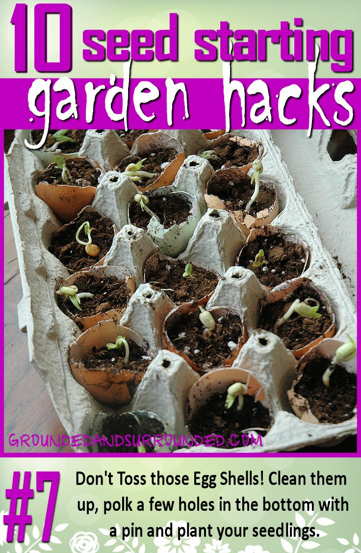 What a great way to use up egg shells! Just take your shell halves, poke a few holes in the bottom with a pin, and grow your seedlings in the egg carton. This is even more fun wen you have added backyard chickens to your family!